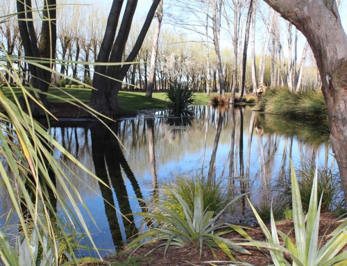 Streams, waterways and ponds